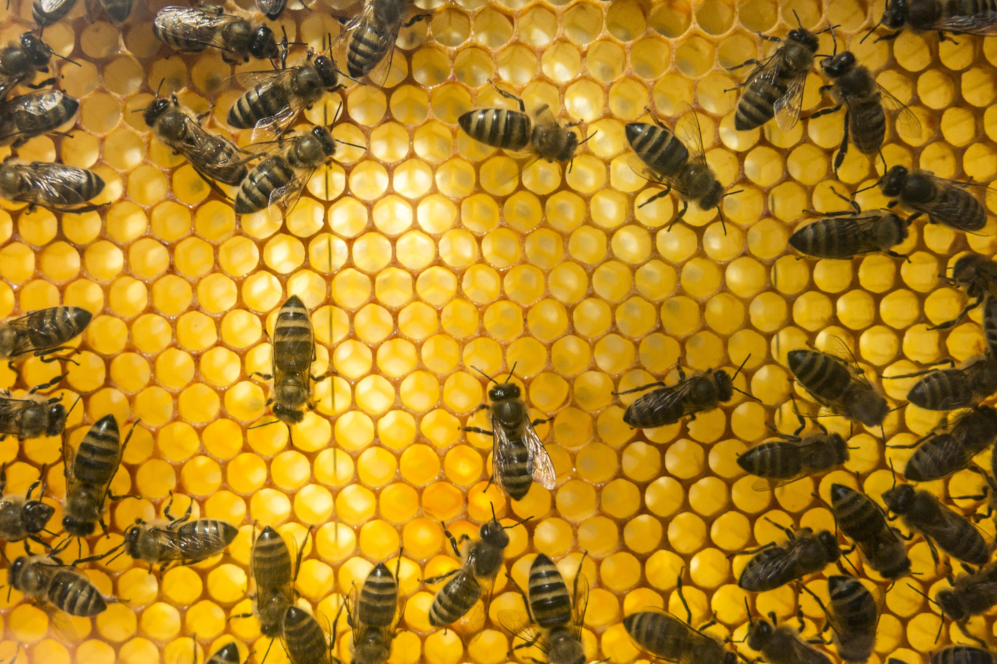 Både Birgit (81) og hennes bier fikk plass på sykehjemmet