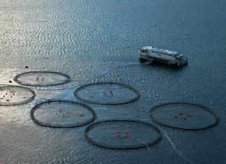 De norske fiskeressursene