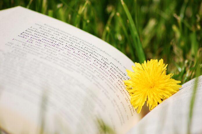 نصائح كتاب لفصل الصيف. (الصورة: Pixabay)